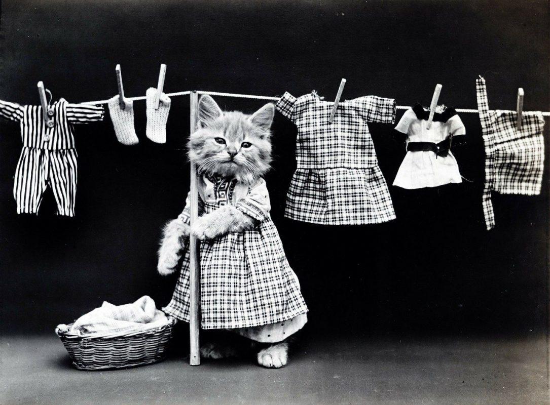 Comment blanchir un vêtement blanc ? 10 Méthodes 8 | Soirée Blanche
